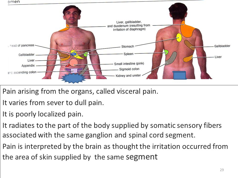 Pain arising from the organs, called visceral pain.