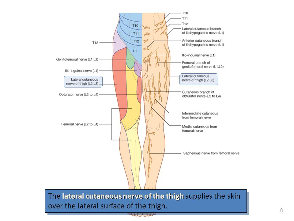 The lateral cutaneous nerve of the thigh supplies the skin over the lateral surface of the thigh.