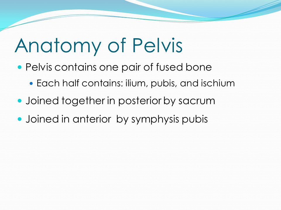 Anatomy of Pelvis Pelvis contains one pair of fused bone