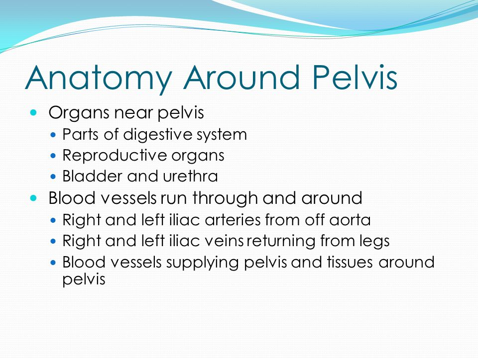 Anatomy Around Pelvis Organs near pelvis