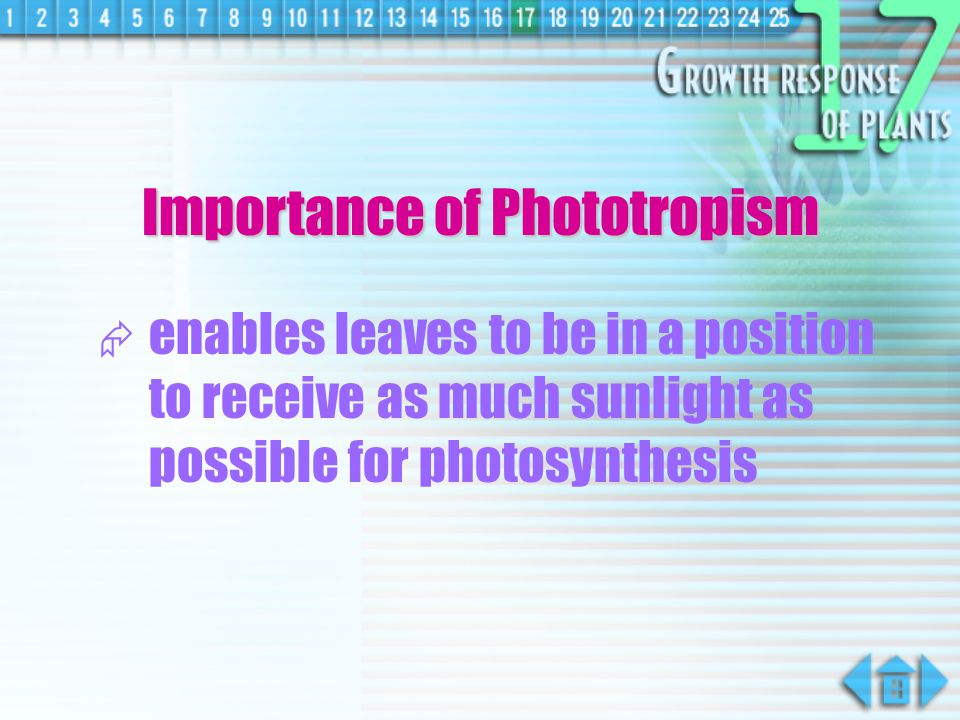Importance of Phototropism
