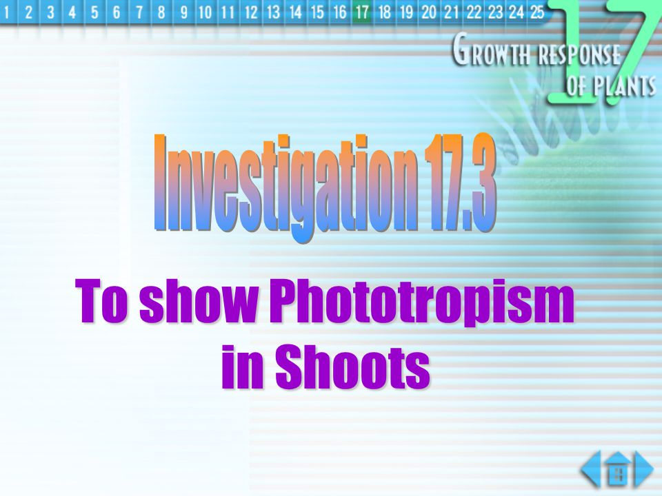 To show Phototropism in Shoots