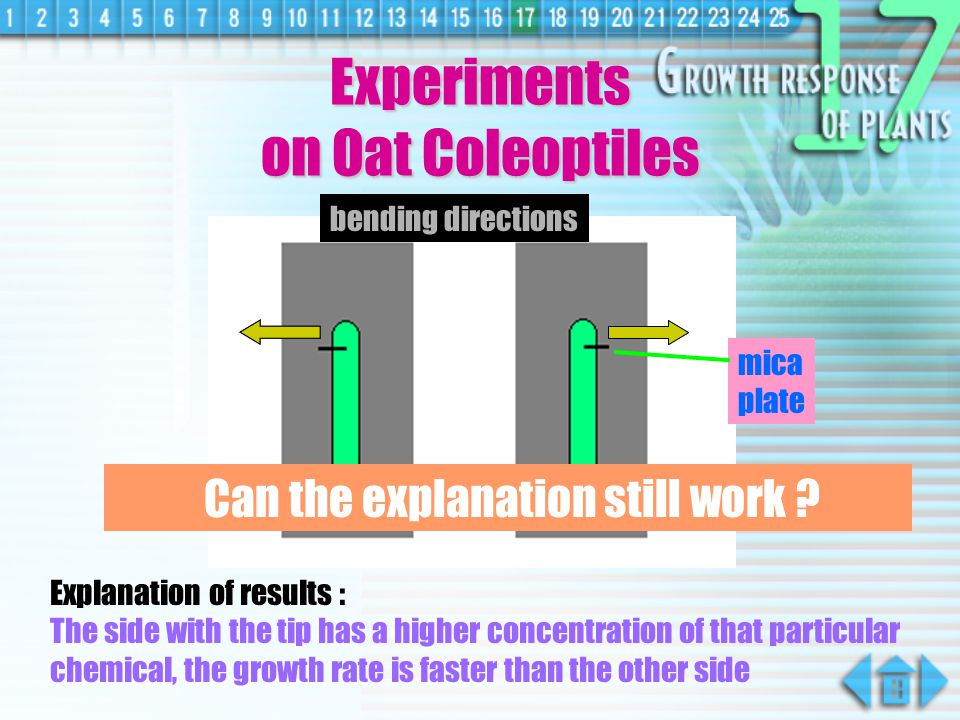 Experiments on Oat Coleoptiles