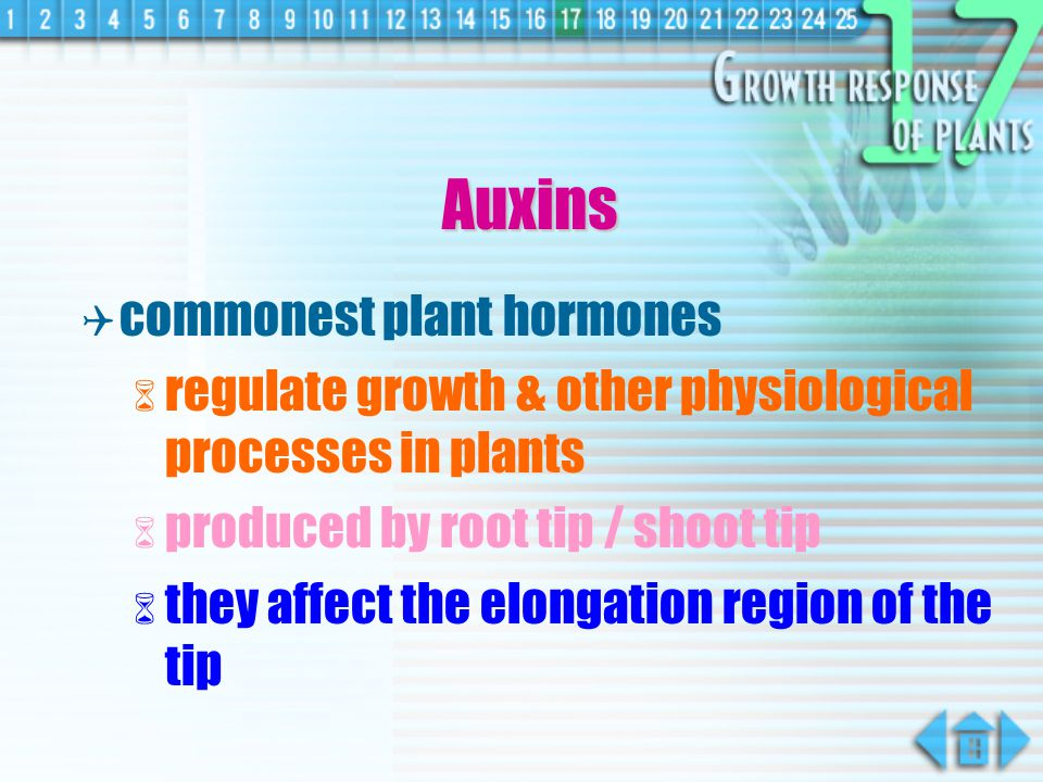 Auxins commonest plant hormones
