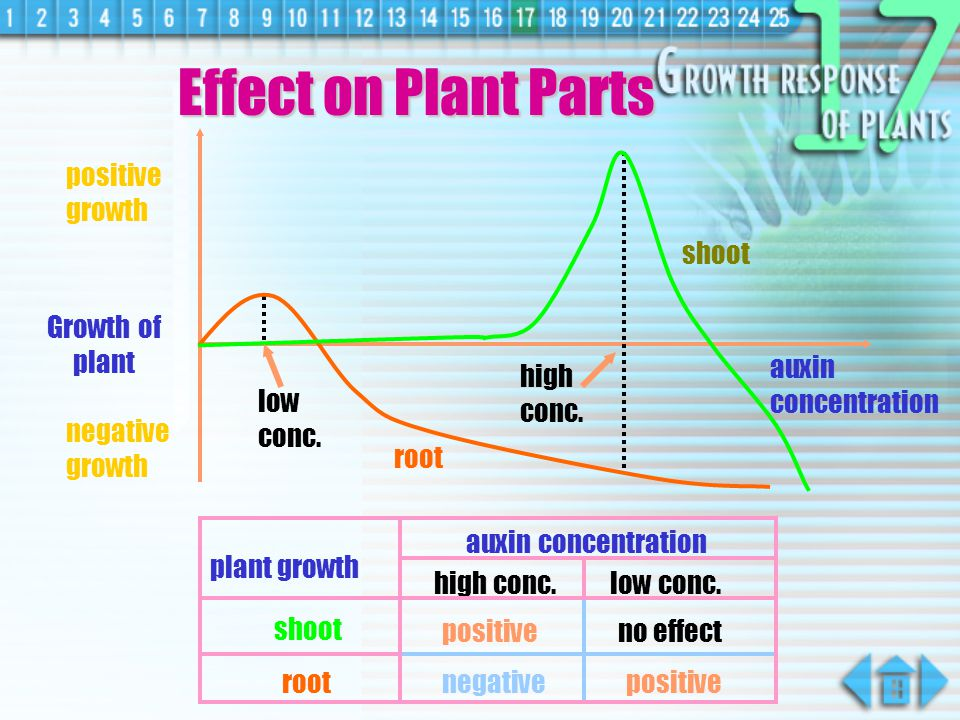 Effect on Plant Parts shoot positive growth root Growth of plant low