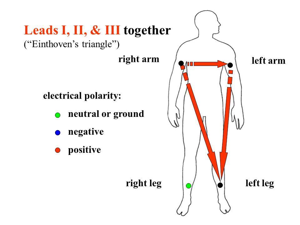 Leads I, II, & III together ( Einthoven's triangle )