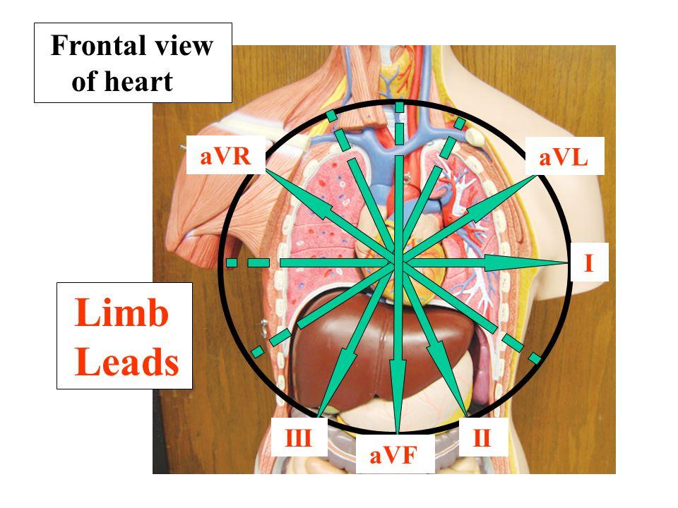 Frontal view of heart aVR aVL I Limb Leads III II aVF