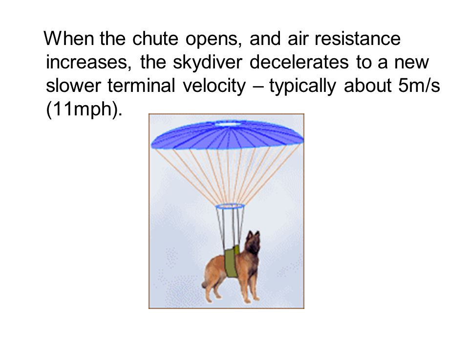 When the chute opens, and air resistance increases, the skydiver decelerates to a new slower terminal velocity – typically about 5m/s (11mph).