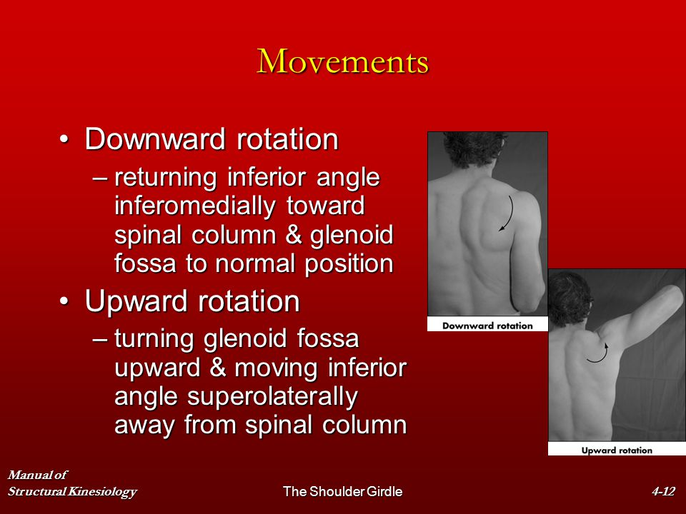 Movements Downward rotation Upward rotation