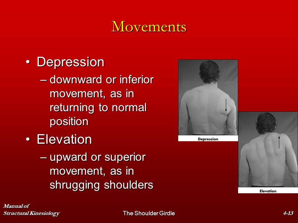 Movements Depression Elevation