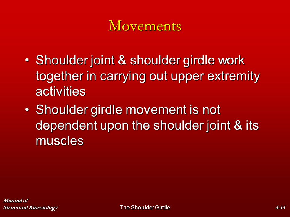 Movements Shoulder joint & shoulder girdle work together in carrying out upper extremity activities.
