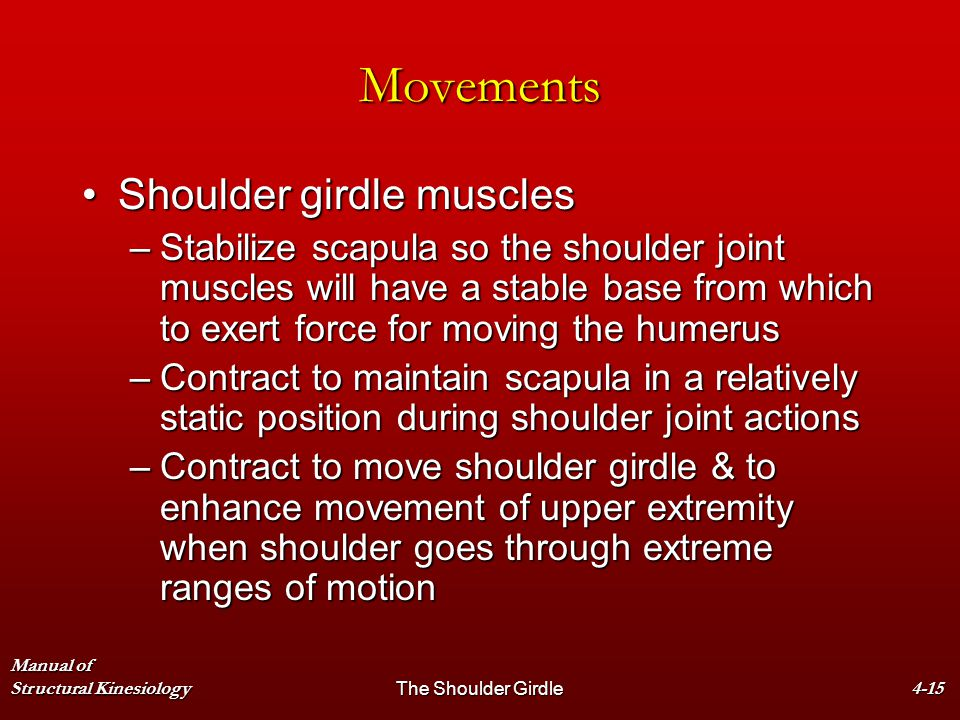 Movements Shoulder girdle muscles