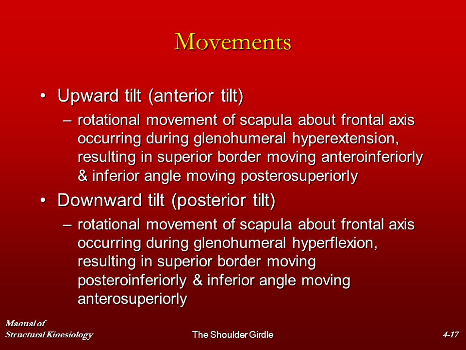 Movements Upward tilt (anterior tilt) Downward tilt (posterior tilt)
