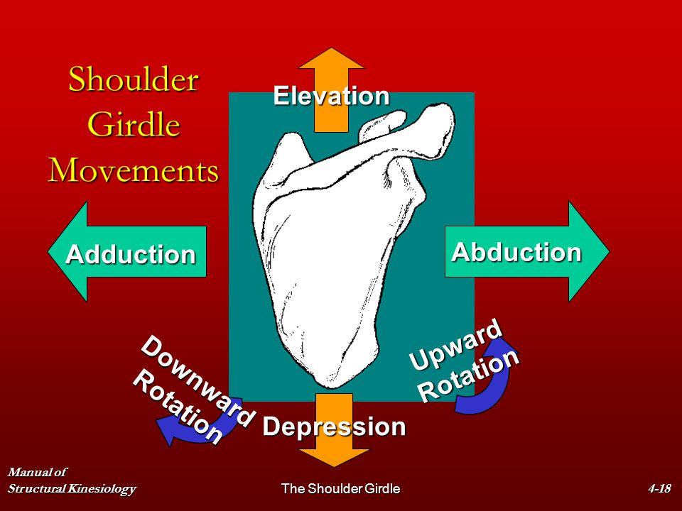 Shoulder Girdle Movements