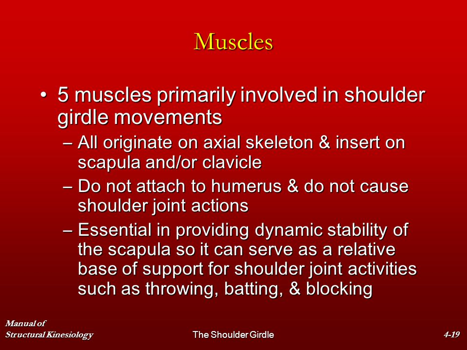 Muscles 5 muscles primarily involved in shoulder girdle movements