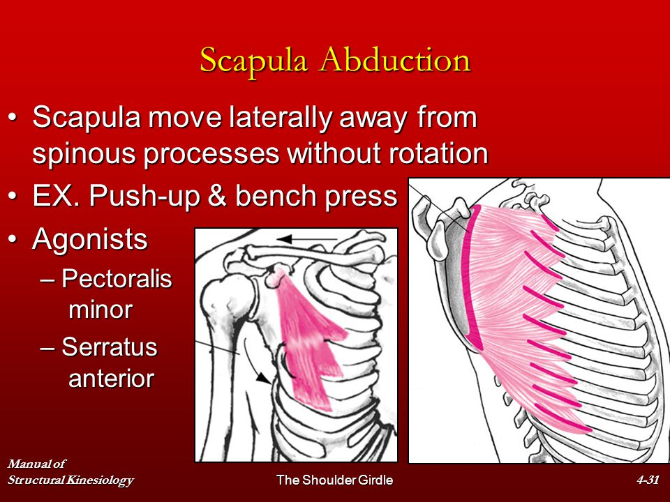 Scapula Abduction Scapula move laterally away from spinous processes without rotation. EX. Push-up & bench press.