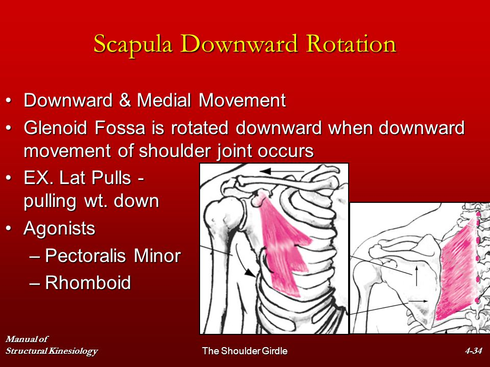 Scapula Downward Rotation