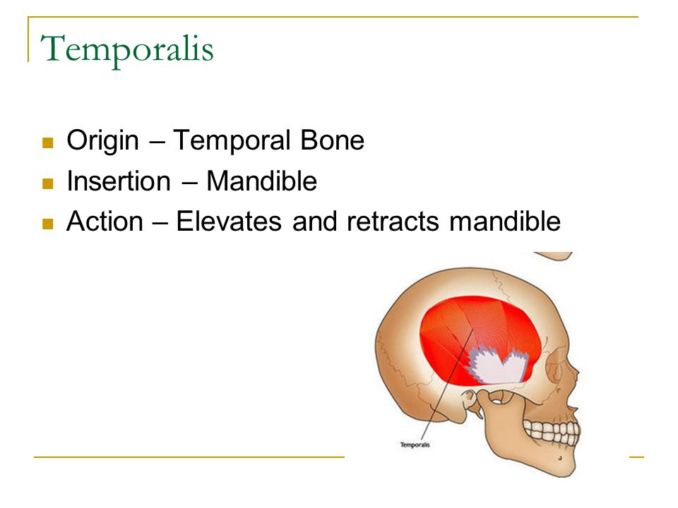 Temporalis Origin – Temporal Bone Insertion – Mandible