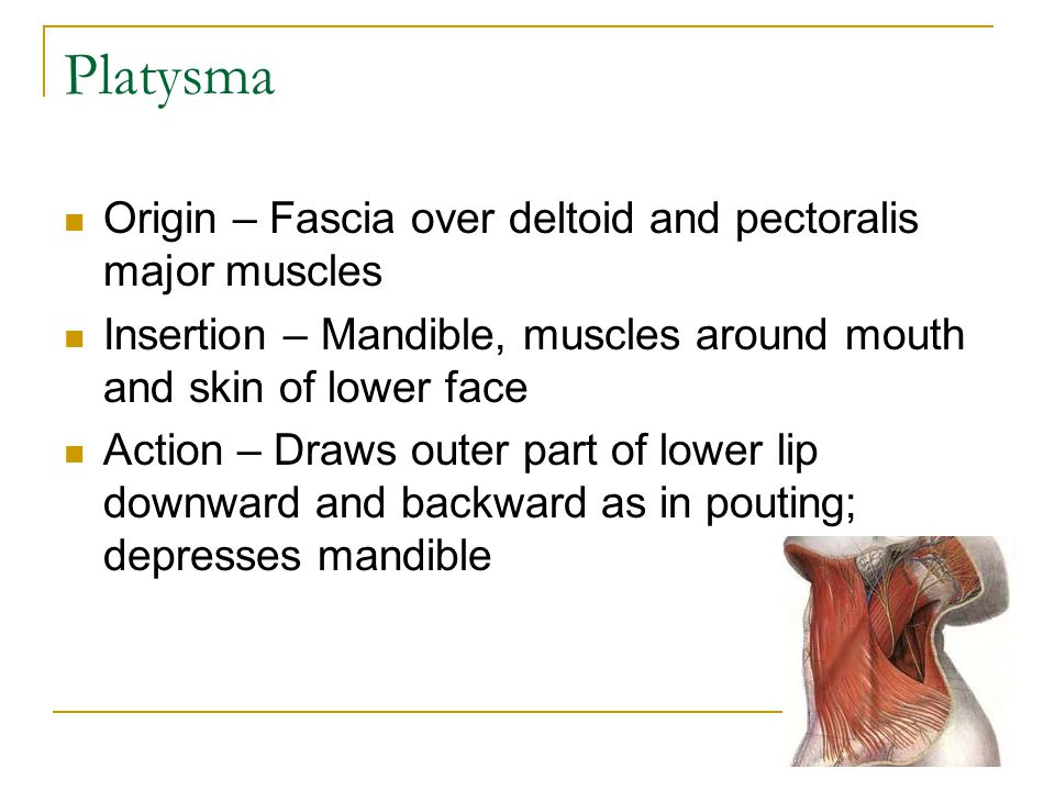 Platysma Origin – Fascia over deltoid and pectoralis major muscles