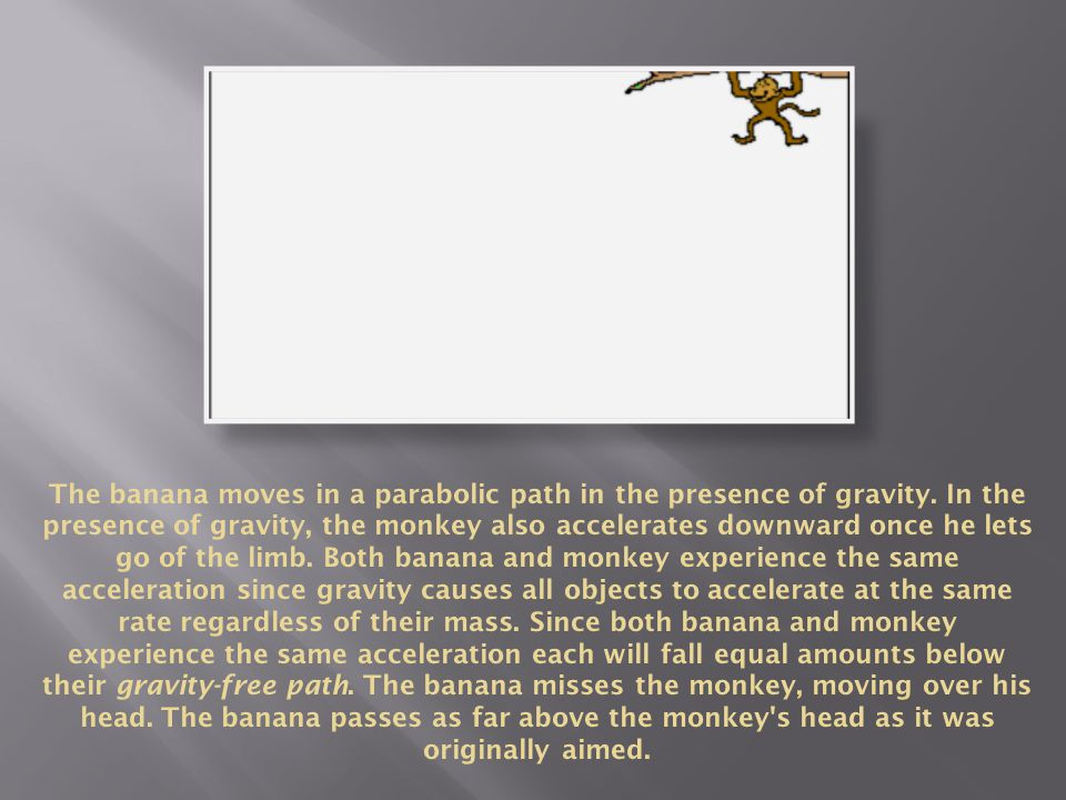 The banana moves in a parabolic path in the presence of gravity