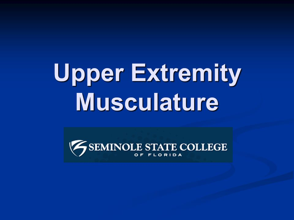 Upper Extremity Musculature