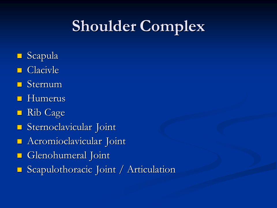 Shoulder Complex Scapula Clacivle Sternum Humerus Rib Cage