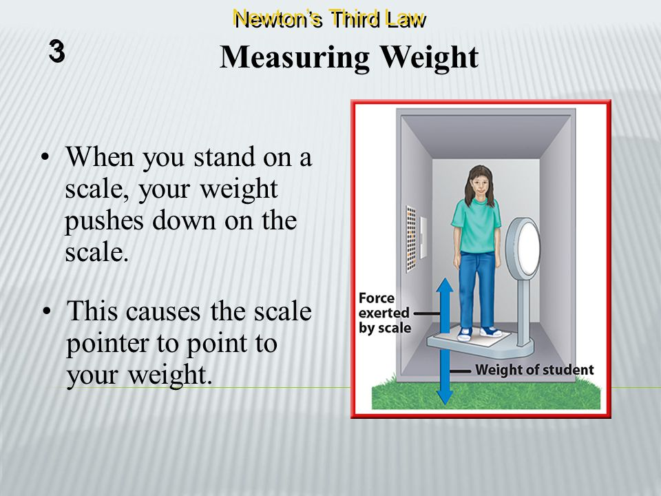 Newton's Third Law 3. Measuring Weight. When you stand on a scale, your weight pushes down on the scale.