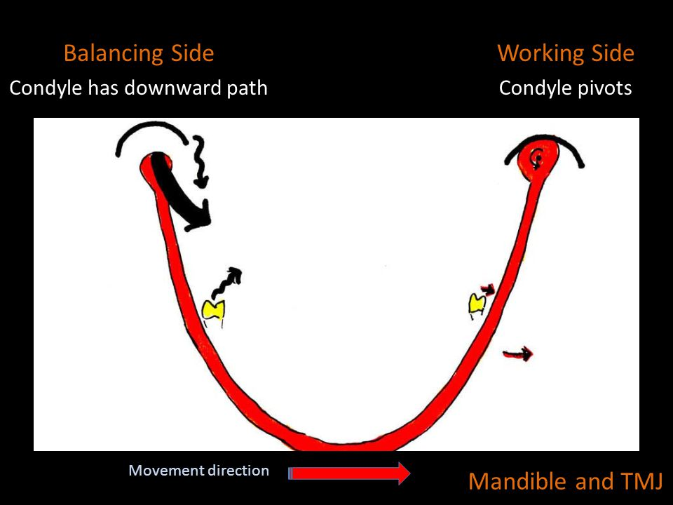 Condyle has downward path