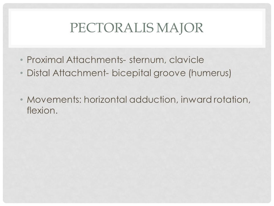 Pectoralis Major Proximal Attachments- sternum, clavicle