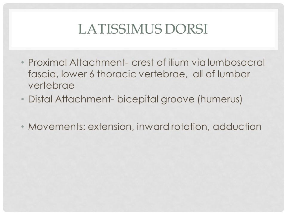 Latissimus Dorsi Proximal Attachment- crest of ilium via lumbosacral fascia, lower 6 thoracic vertebrae, all of lumbar vertebrae.
