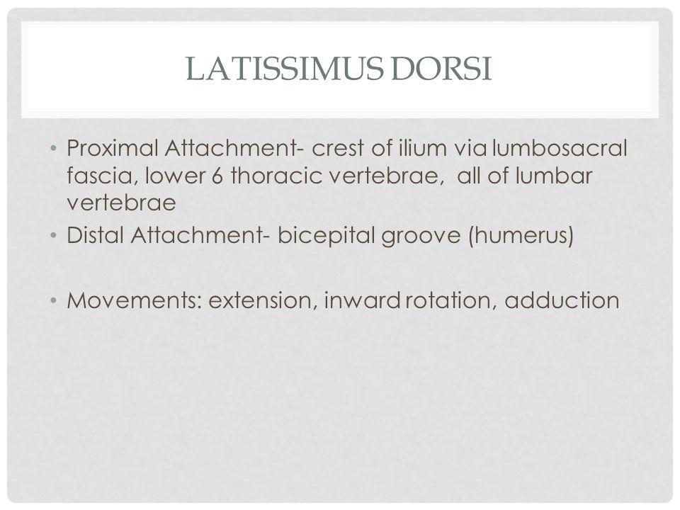 Latissimus Dorsi Proximal Attachment- crest of ilium via lumbosacral fascia, lower 6 thoracic vertebrae, all of lumbar vertebrae.