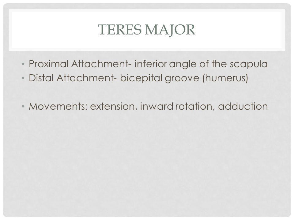 Teres Major Proximal Attachment- inferior angle of the scapula