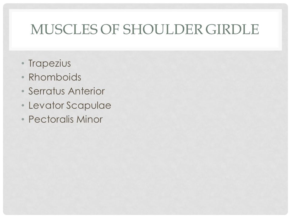 Muscles of Shoulder Girdle