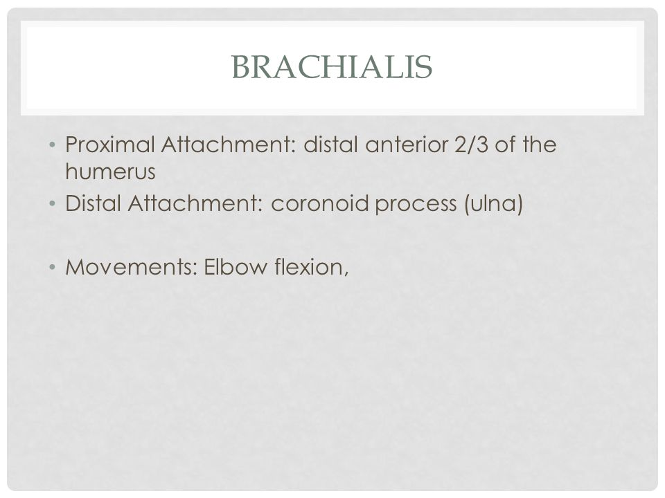 brachialis Proximal Attachment: distal anterior 2/3 of the humerus