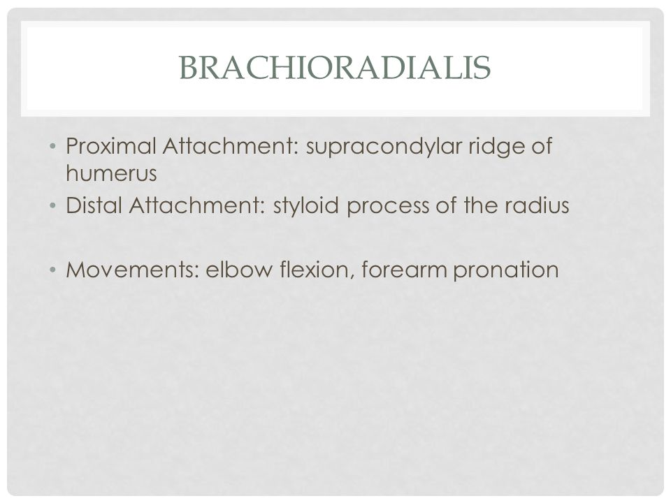 brachioradialis Proximal Attachment: supracondylar ridge of humerus