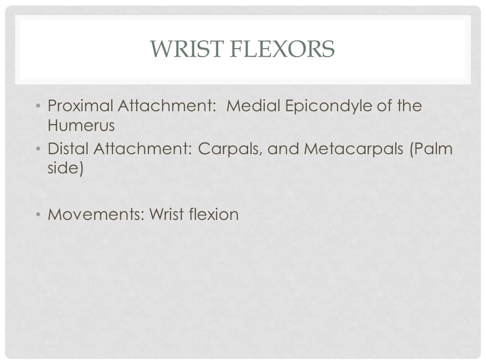 Wrist Flexors Proximal Attachment: Medial Epicondyle of the Humerus
