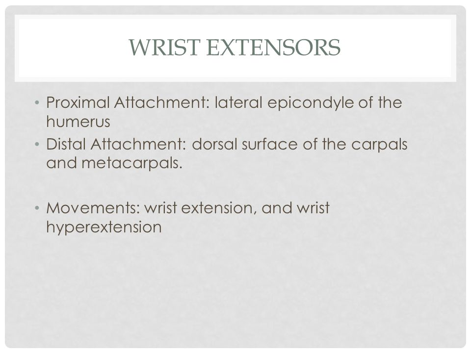 Wrist Extensors Proximal Attachment: lateral epicondyle of the humerus