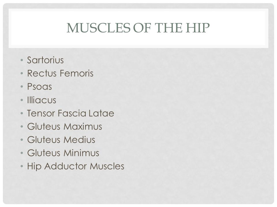 Muscles of the Hip Sartorius Rectus Femoris Psoas Illiacus