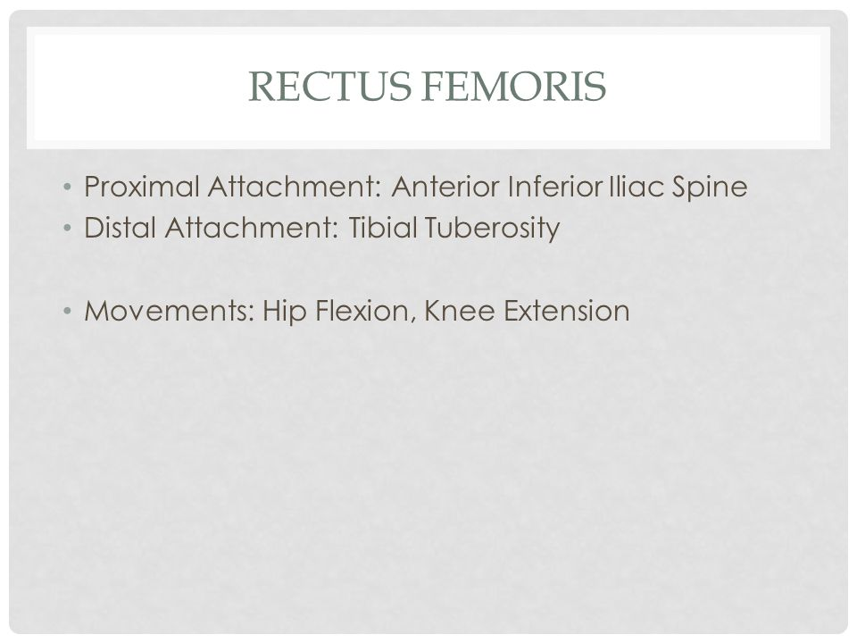 Rectus Femoris Proximal Attachment: Anterior Inferior Iliac Spine