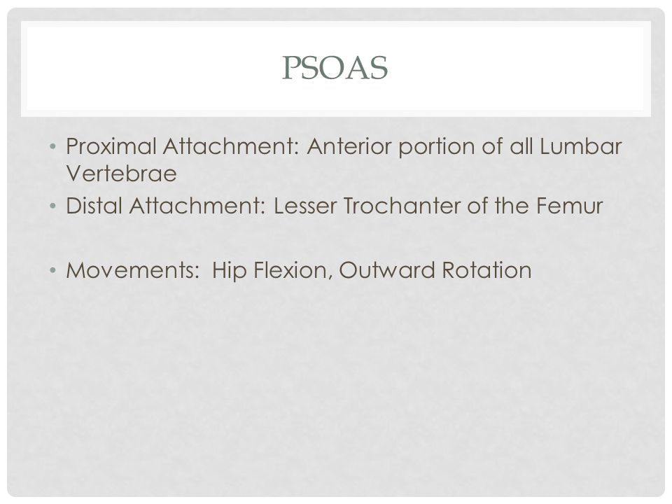 Psoas Proximal Attachment: Anterior portion of all Lumbar Vertebrae