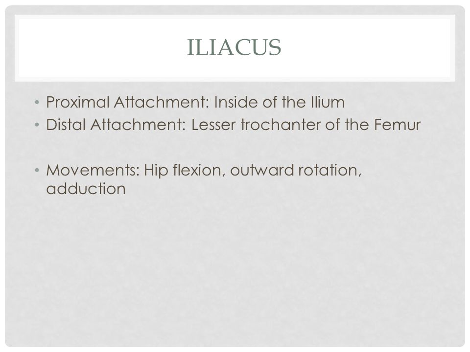 Iliacus Proximal Attachment: Inside of the Ilium
