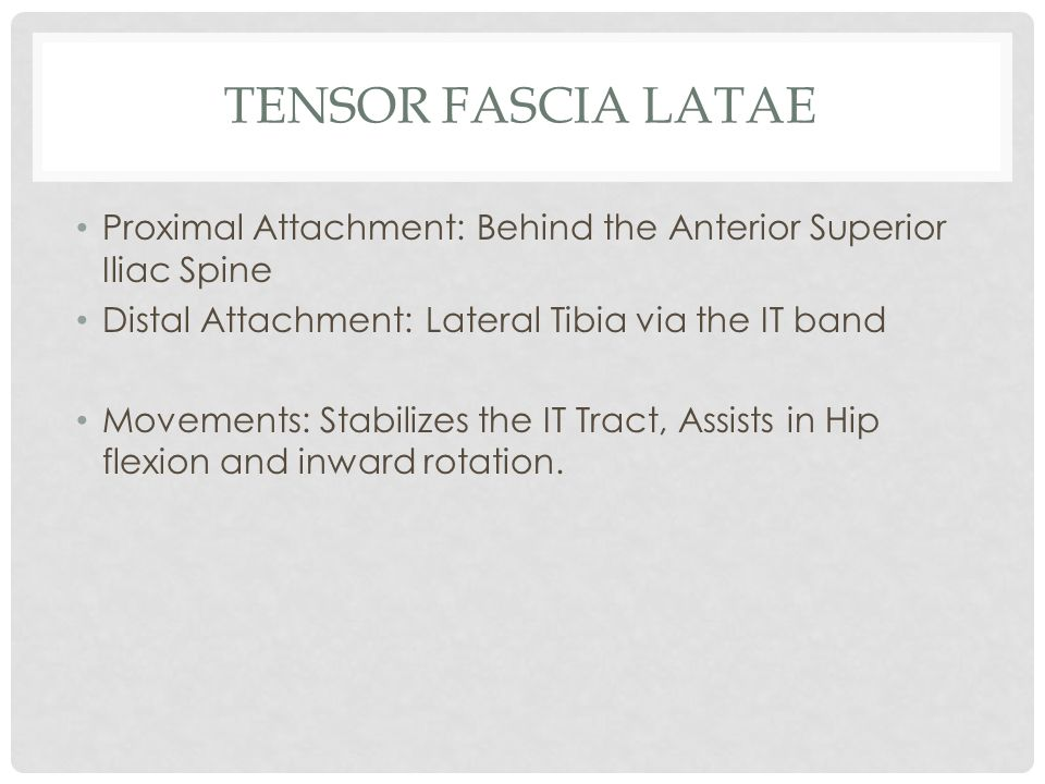 Tensor Fascia Latae Proximal Attachment: Behind the Anterior Superior Iliac Spine. Distal Attachment: Lateral Tibia via the IT band.