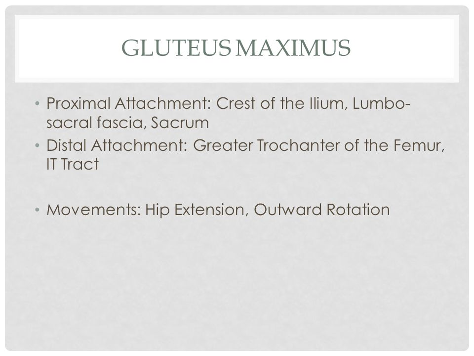 Gluteus Maximus Proximal Attachment: Crest of the Ilium, Lumbo- sacral fascia, Sacrum. Distal Attachment: Greater Trochanter of the Femur, IT Tract.