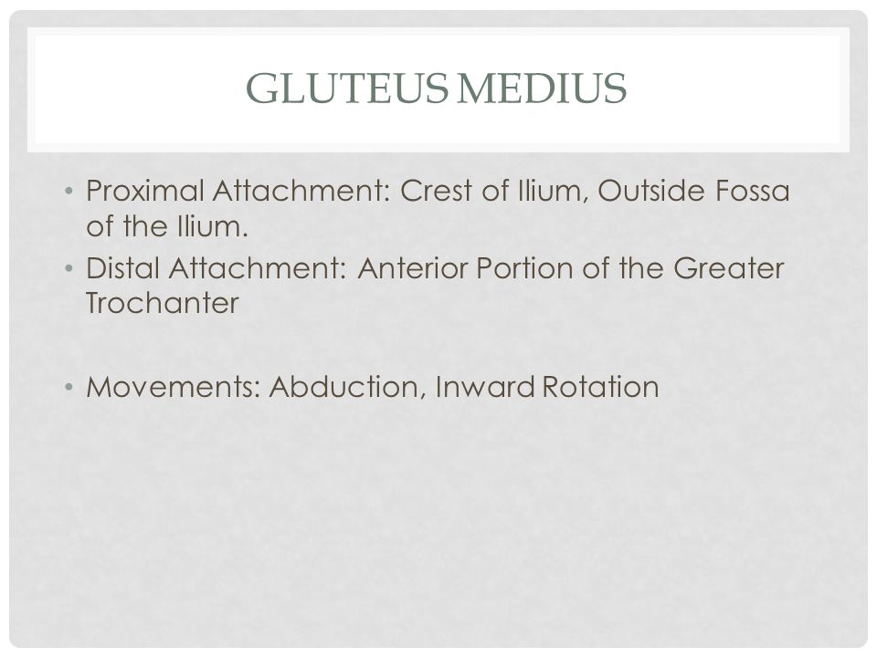 Gluteus Medius Proximal Attachment: Crest of Ilium, Outside Fossa of the Ilium. Distal Attachment: Anterior Portion of the Greater Trochanter.