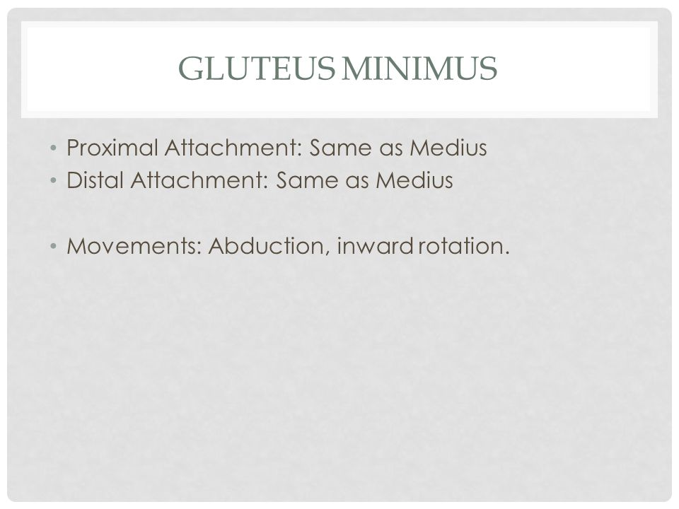 Gluteus Minimus Proximal Attachment: Same as Medius