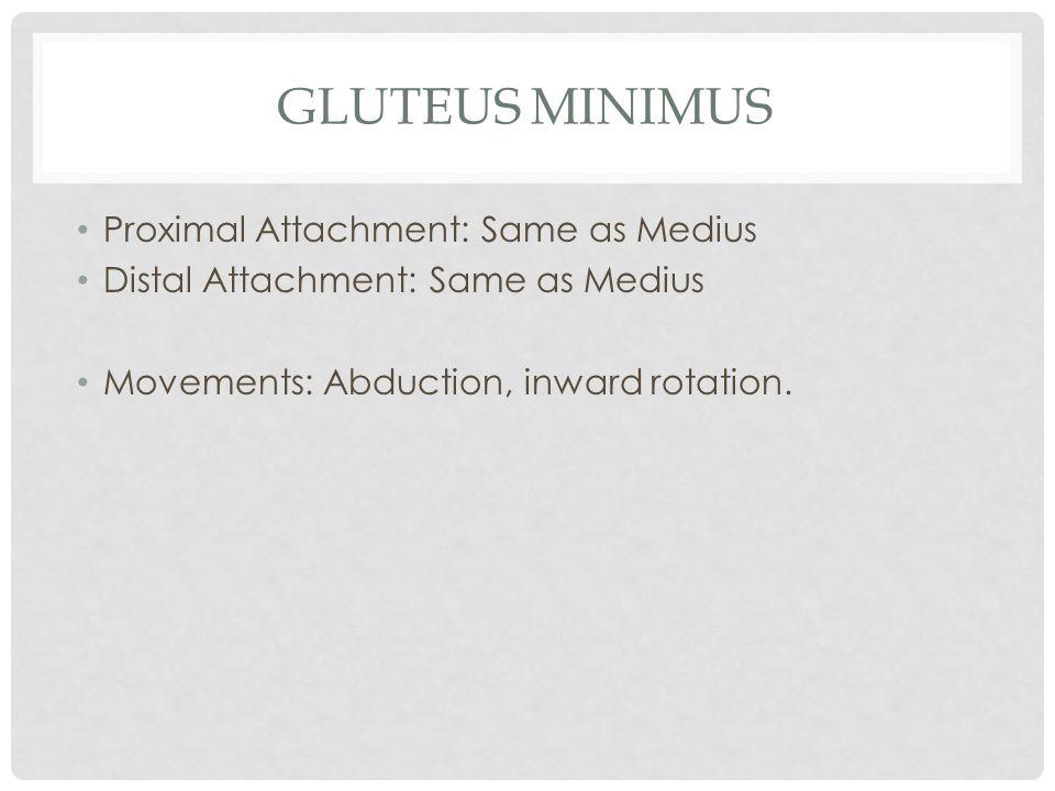Gluteus Minimus Proximal Attachment: Same as Medius