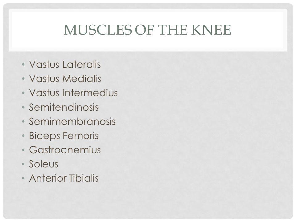 Muscles of the Knee Vastus Lateralis Vastus Medialis