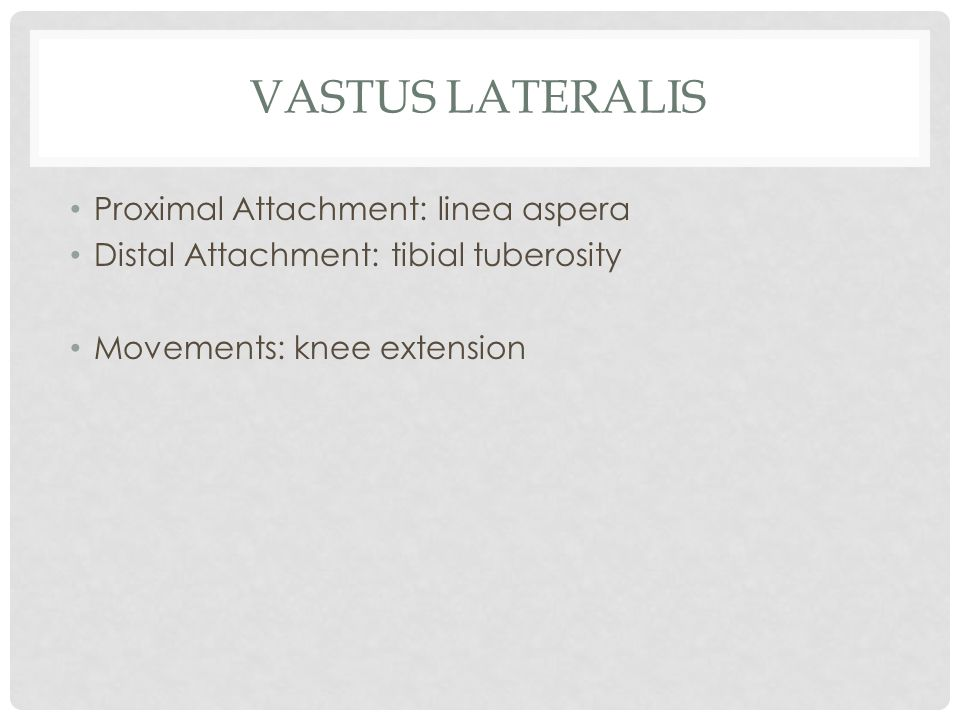 Vastus Lateralis Proximal Attachment: linea aspera
