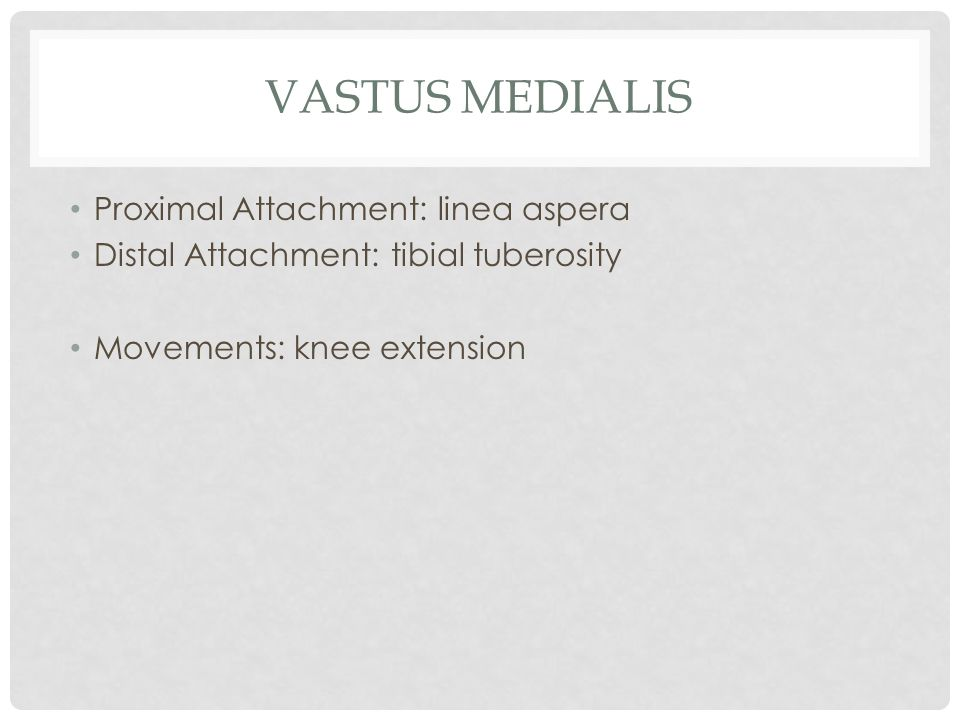 Vastus Medialis Proximal Attachment: linea aspera