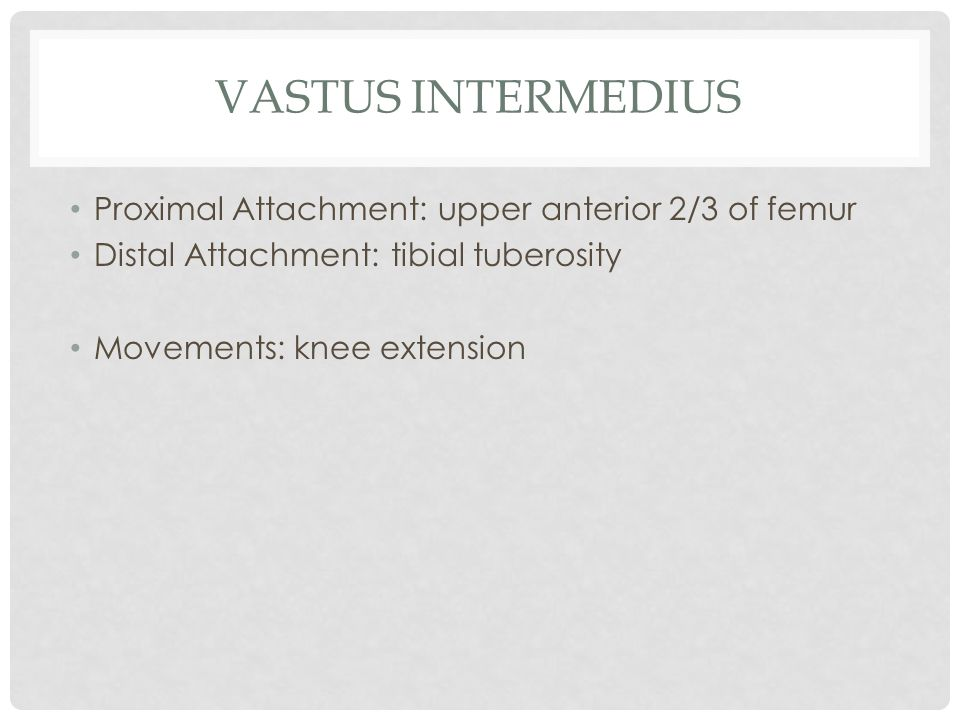 Vastus intermedius Proximal Attachment: upper anterior 2/3 of femur